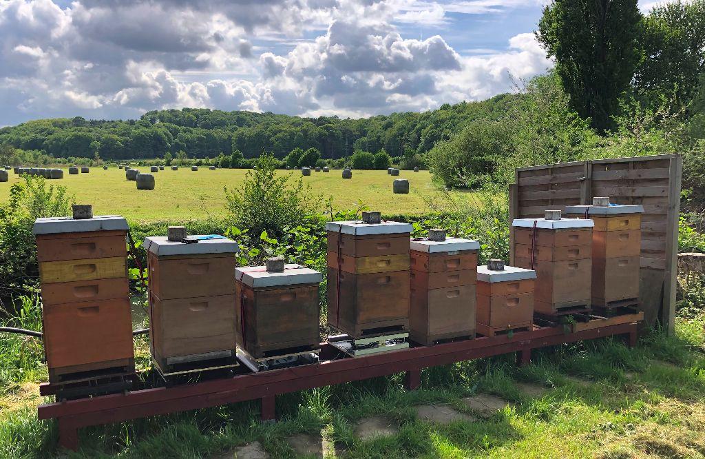 Bienenstand, Beuten teilweise mit beelogger-Systemen ausgerüstet